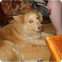 Adopt A Pet :: Nala - New Boston, NH