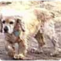 Adopt A Pet :: Laura - dewey, AZ