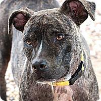 Adopt A Pet :: Natalia - Houston, TX