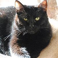 Adopt A Pet :: Emerald 11353 - Atlanta, GA