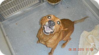 Labrador Retriever Mix Dog for adoption in Sandusky, Ohio - MABLE