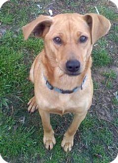 Manchester Terrier Mix Dog for adoption in Grand Saline, Texas - Annie
