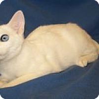 Adopt A Pet :: Keanu - Colorado Springs, CO