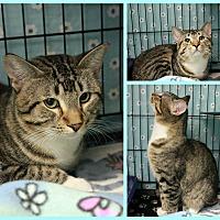 Adopt A Pet :: Malcom - New Richmond,, WI
