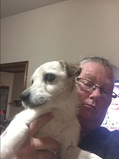 Jack Russell Terrier Dog for adoption in Blanchard, Oklahoma - Pup