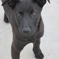 Adopt A Pet :: Mystery - Jewett City, CT