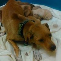 Adopt A Pet :: Hope - Colton, CA