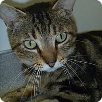 Adopt A Pet :: Sully - Hamburg, NY