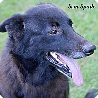 Adopt A Pet :: Sam Spade~adopted! - Southbury, CT