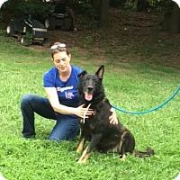 Adopt A Pet :: Bogie - Greeneville, TN