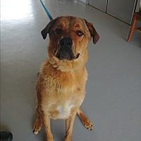 Adopt A Pet :: Dudley - Charlotte, NC