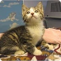 Adopt A Pet :: Cameo - Sterling Hgts, MI