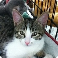 Adopt A Pet :: Meredith - Riverside, RI