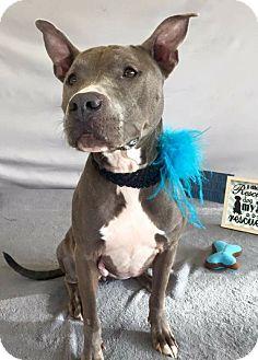 Terrier (Unknown Type, Medium) Mix Dog for adoption in Flint, Michigan - Janie  #5873