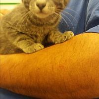 Adopt A Pet :: Brainy Smurf - Lancaster, CA