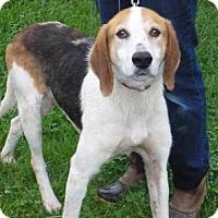 Adopt A Pet :: Oliver, D16 - Mineral, VA