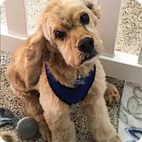 Adopt A Pet :: Cliff - Thousand Oaks, CA