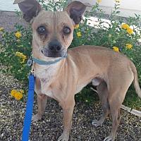 Adopt A Pet :: Cesar - Las Vegas, NV