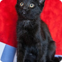 Adopt A Pet :: Doby - Muskegon, MI