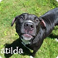 Adopt A Pet :: Matilda - Melbourne, KY