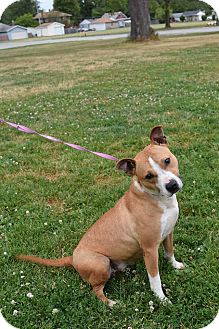 Terrier (Unknown Type, Medium) Mix Dog for adoption in Steger, Illinois - Chili