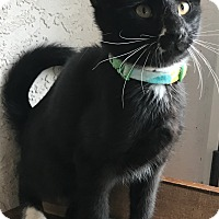 Adopt A Pet :: Braddock - Colorado Springs, CO