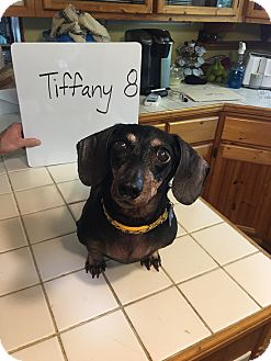 Adopt A Pet :: (Medical Hold)Tiffany  - Marcellus, MI