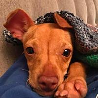 Adopt A Pet :: Slink - Boulder, CO