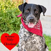 Adopt A Pet :: Trevor - San Leon, TX