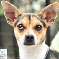 Adopt A Pet :: Jorge - Newburgh, IN