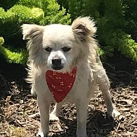 Adopt A Pet :: Ian - Rancho Palos Verdes, CA