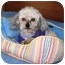 Photo 4 - Poodle (Toy or Tea Cup) Mix Dog for adoption in Osseo, Minnesota - Tinker