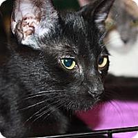 Adopt A Pet :: Ollie (LE) - Little Falls, NJ