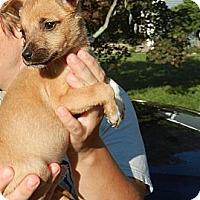 Adopt A Pet :: Tawny - South Jersey, NJ