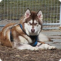 Adopt A Pet :: Lucy--PENDING! - Belleville, MI