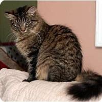 Adopt A Pet :: Lola - Arlington, VA
