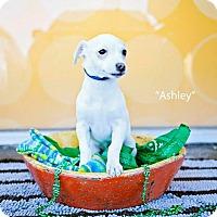 Adopt A Pet :: Ashley Judd - Shawnee Mission, KS