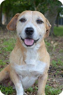 Terrier (Unknown Type, Medium)/Basset Hound Mix Dog for adoption in LAFAYETTE, Louisiana - JOHN WAYNE