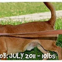 Adopt A Pet :: Jacob Harley - Siler City, NC