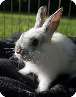 Other/Unknown for adoption in Kingston, Ontario - Iris