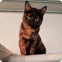 Adopt A Pet :: Garland - Geneseo, IL