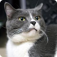 Adopt A Pet :: Dory - Tucson, AZ