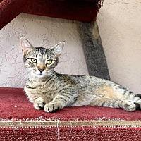 Adopt A Pet :: CINNAMON - Ocala, FL