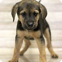 Adopt A Pet :: Paris - Waldorf, MD
