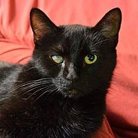 Adopt A Pet :: Ivy - Monroe, NC