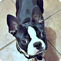 Adopt A Pet :: Roscoe Jones-Pending - Greensboro, NC