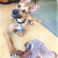 Adopt A Pet :: Decken (TO) - Livonia, MI