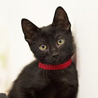 Adopt A Pet :: Jimmy - Sioux Falls, SD