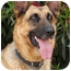 Photo 2 - German Shepherd Dog Dog for adoption in Los Angeles, California - Rocky von Lancaster