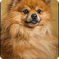 Adopt A Pet :: Buddy Johnson - Owensboro, KY